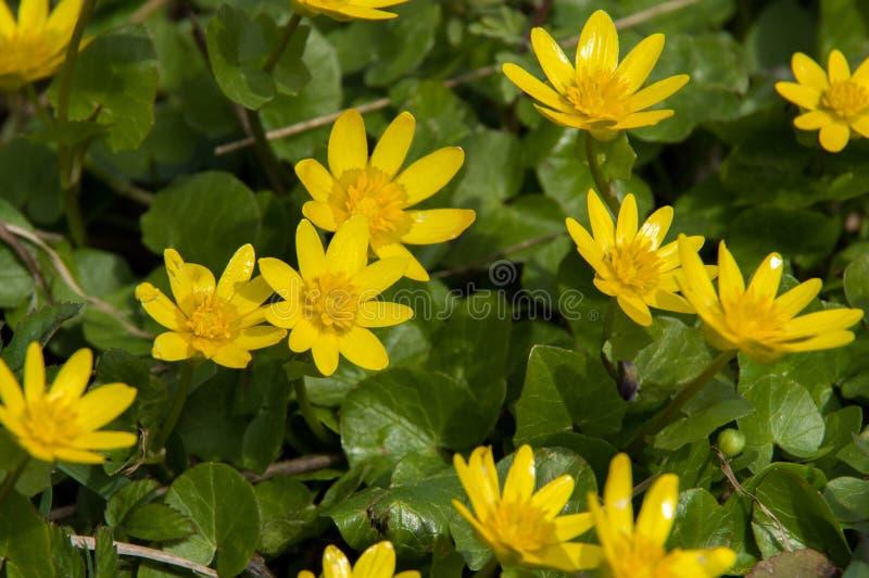 Download Landschap Met Gele Bloemen Op De Achtergrond Stock Afbeelding - Afbeelding bestaande uit bloemblaadje, landschap: 54076451