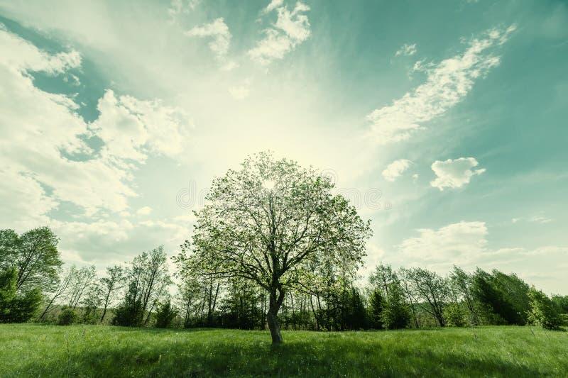 Landschap met groene eenzame boom op weide stock foto's