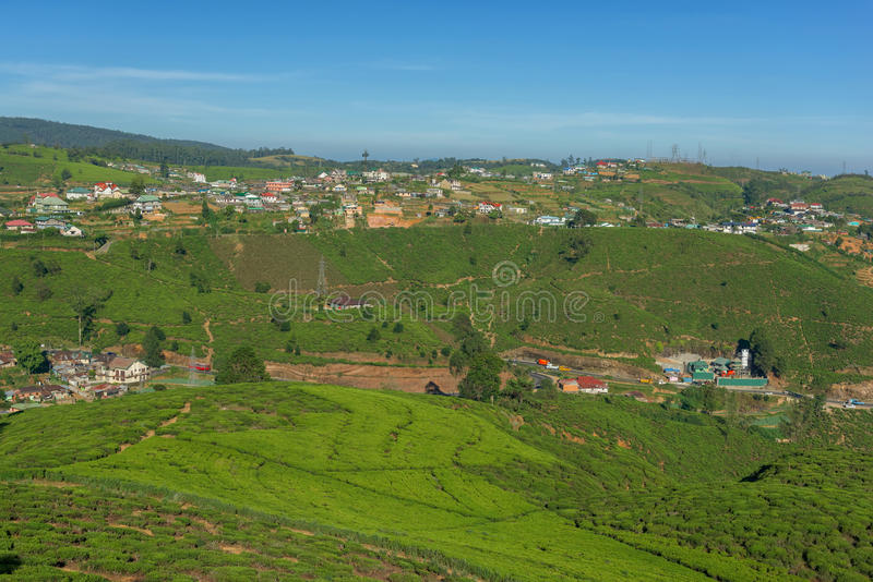 Landschap met groene gebieden van thee stock fotografie