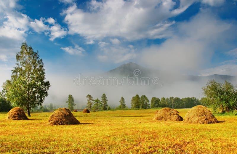 Landschap met hayfield stock foto