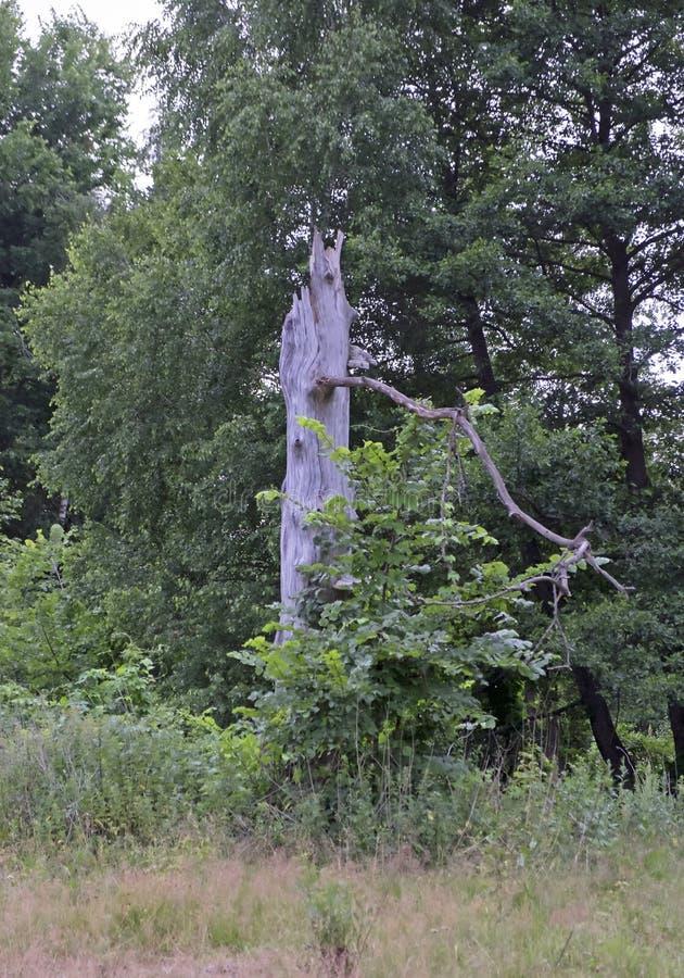 Landschap met het oog op het bos stock fotografie