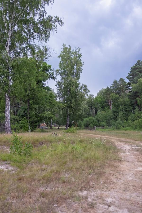 Landschap met het oog op het bos stock afbeelding