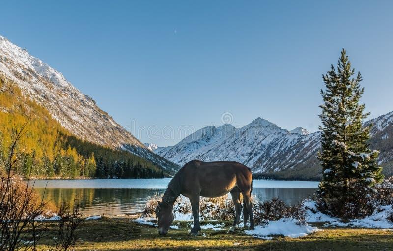 Landschap met het paard in Altai-bergen, Rusland royalty-vrije stock fotografie