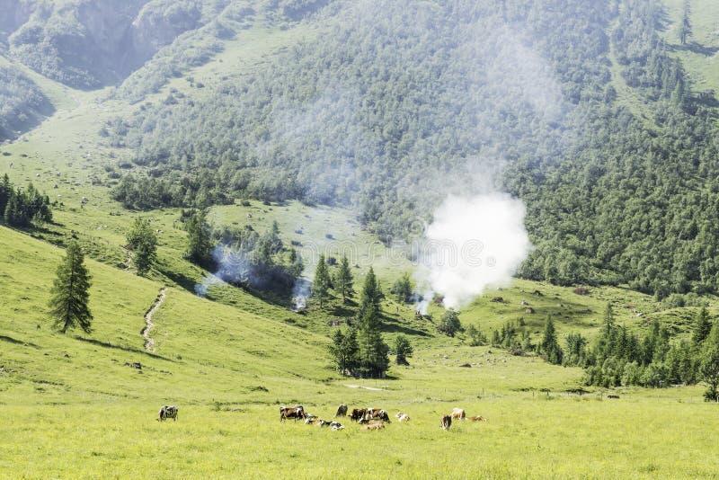 Landschap met koeien en wilde brand royalty-vrije stock afbeelding