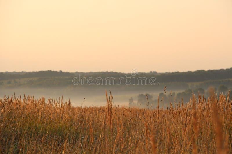 Landschap met mist stock afbeelding