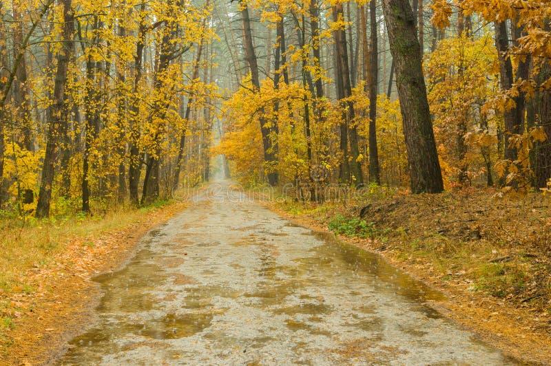 Landschap met mist, regen en bos royalty-vrije stock afbeelding