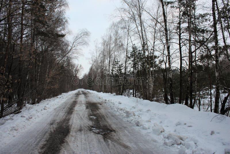 Landschap met mooie mist in het de lentebos of een weg door het geheimzinnige de winterbos de weg door de winter stock afbeelding