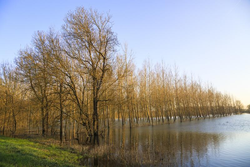 Landschap met overstroomde bomen onder het toenemen wateren royalty-vrije stock foto