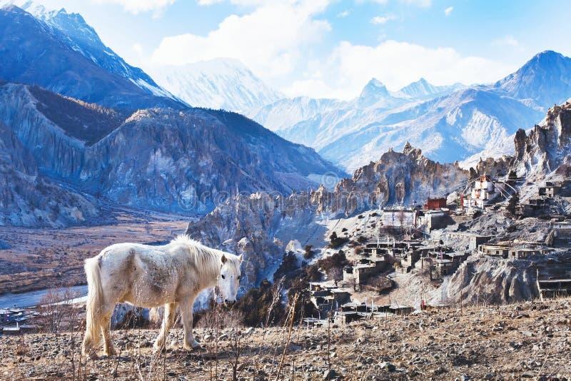 Landschap met paard van Nepal, Tibet stock afbeeldingen