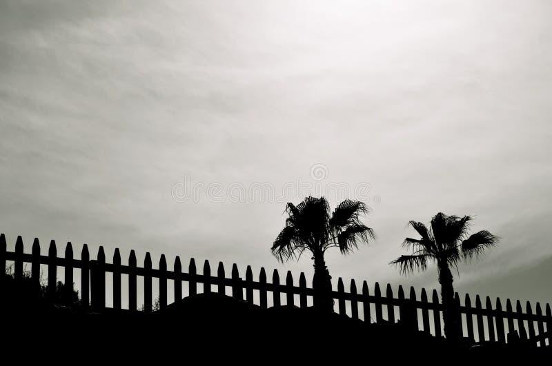 Landschap met palmen royalty-vrije stock afbeeldingen
