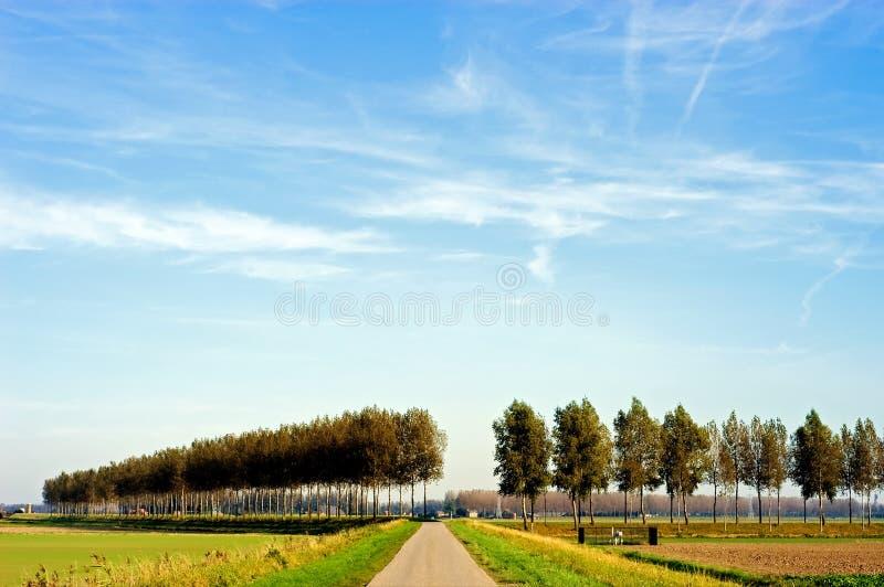 Landschap met populieren stock fotografie