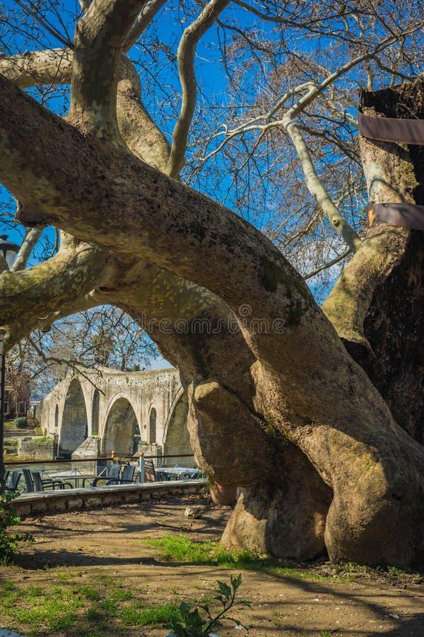 Landschap met reuzeboom dichtbij middeleeuwse brug over rivier Arahthos in Arta, Griekenland stock fotografie