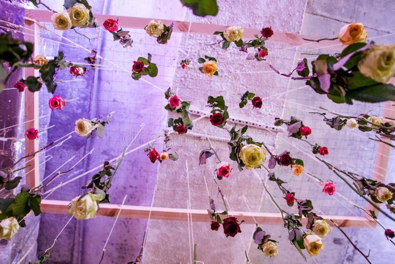 Landschap met rozen Regen van rozen Het vallen nam toe royalty-vrije stock afbeelding