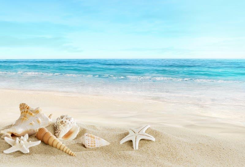 Landschap met shells op tropisch strand royalty-vrije stock afbeeldingen