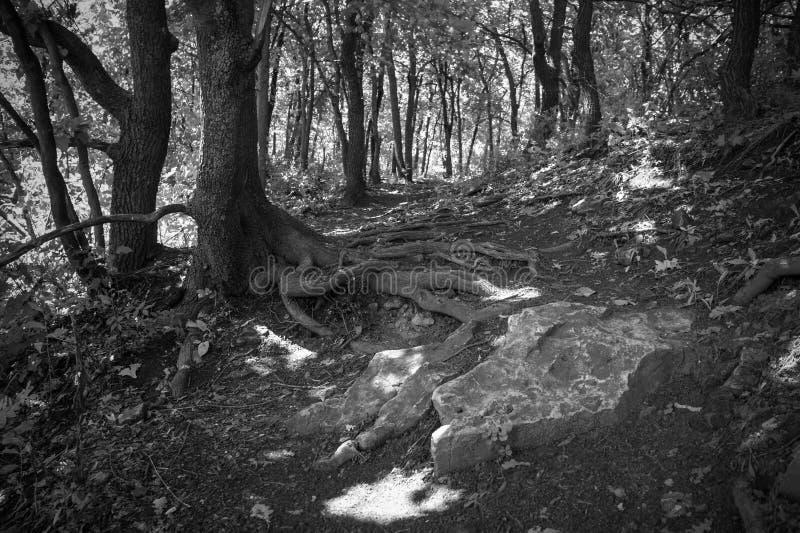Landschap met steen stock afbeelding