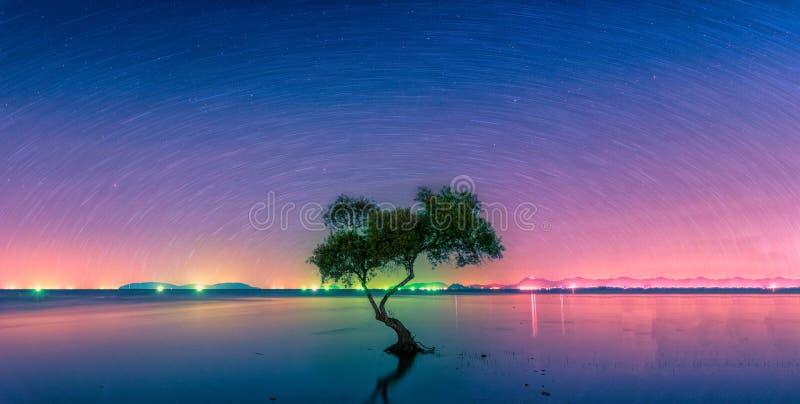 Landschap met stersleep over de boom van de silhouetmangrove in overzees royalty-vrije stock foto