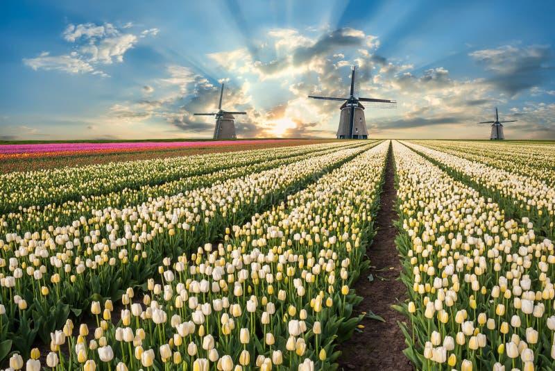 Landschap met tulpengebieden en windmolen stock foto