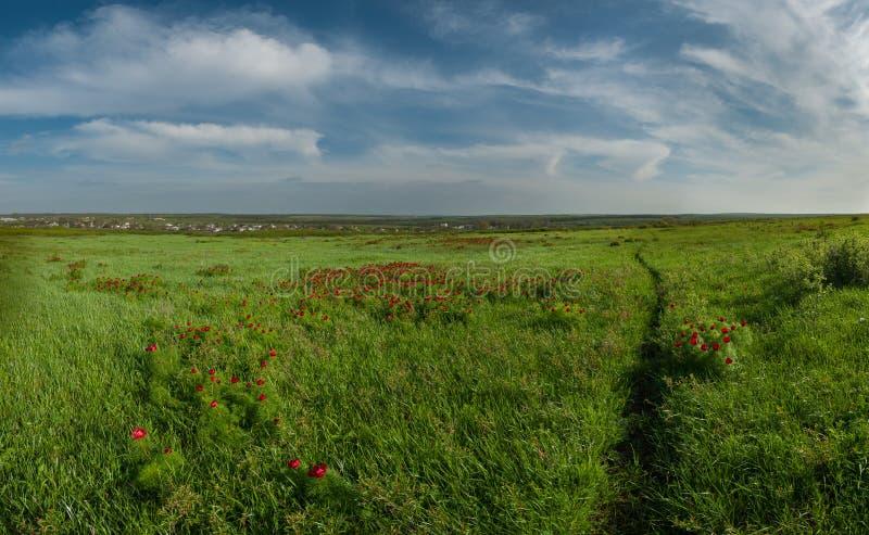 Landschap met weg door een groene weide royalty-vrije stock afbeeldingen