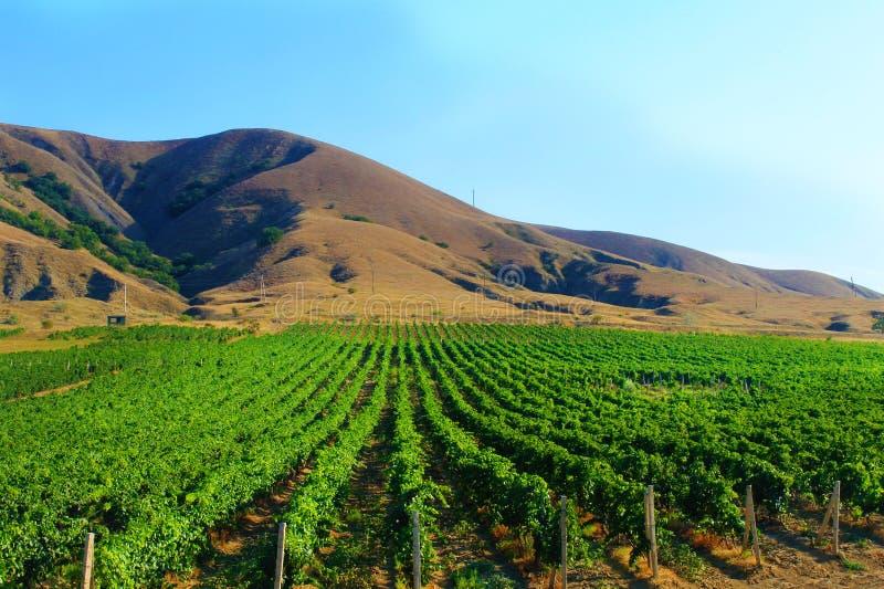 Landschap met wijngaard en bergen stock afbeelding