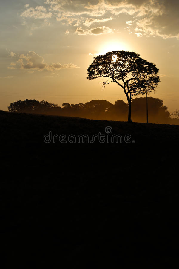 Landschap met zonsondergang stock afbeeldingen
