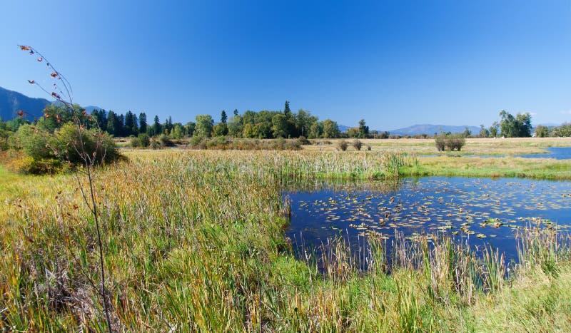 Landschap in Montana stock afbeelding