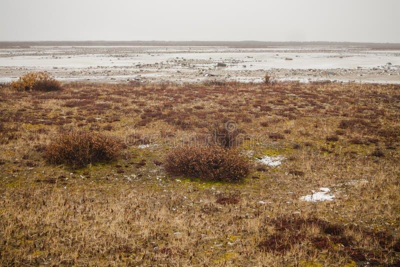 Landschap: Noordpooltoendra royalty-vrije stock foto