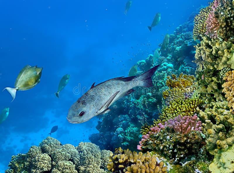 Landschap onder water stock foto