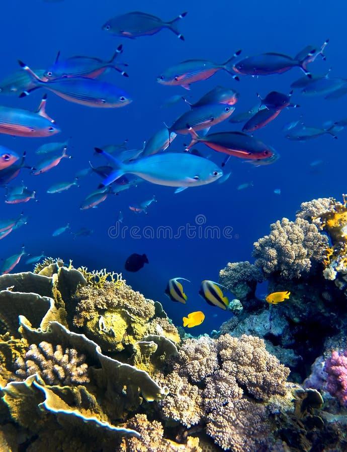 Landschap onder water stock fotografie