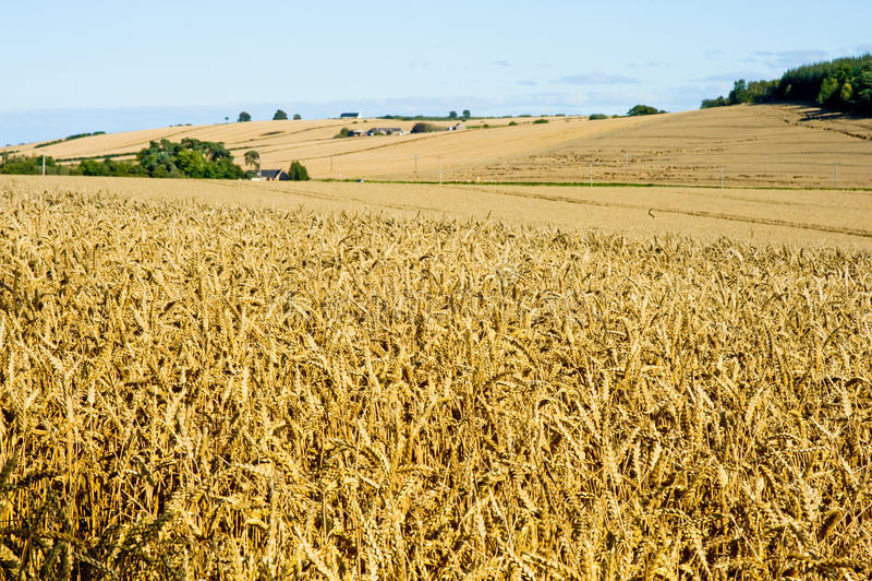 Landschap in oogsttijd. royalty-vrije stock foto