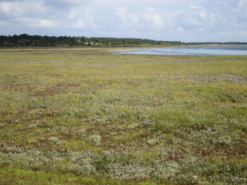 Landschap op Vlieland, landskap på Vlieland arkivfoton