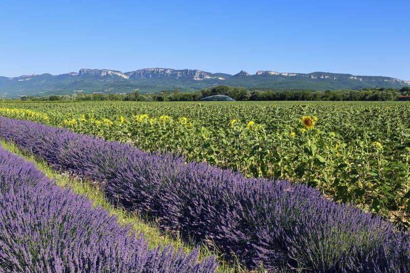 Landschap Provencal: lavendelgebied en zonnebloemengebied stock afbeelding