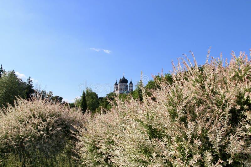 Landschap, schoonheidsklooster, park Feofania de Oekraïne, Kiev royalty-vrije stock foto's