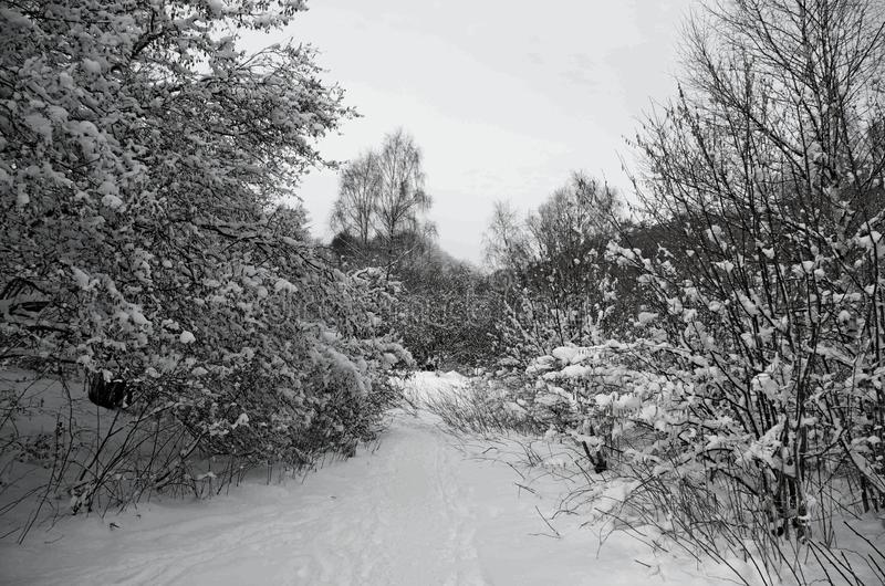Landschap, sneeuw, de winter in Frankrijk, Auvergne royalty-vrije stock afbeeldingen