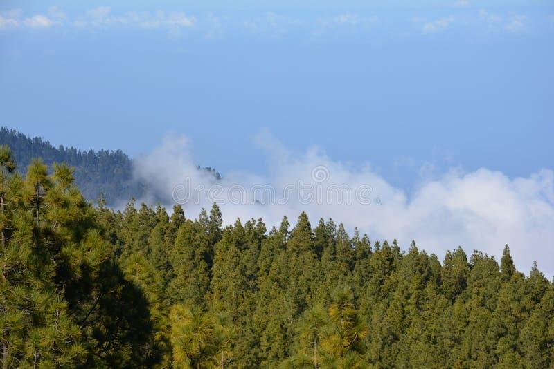Landschap Teide, helling, hemel, bewolkte lanscape van berg het boswolken stock afbeelding