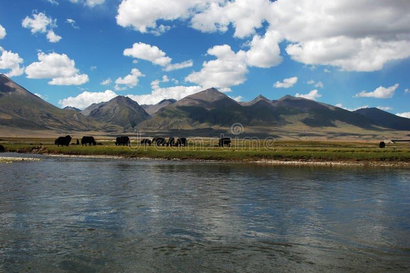 Landschap in Tibet stock afbeelding