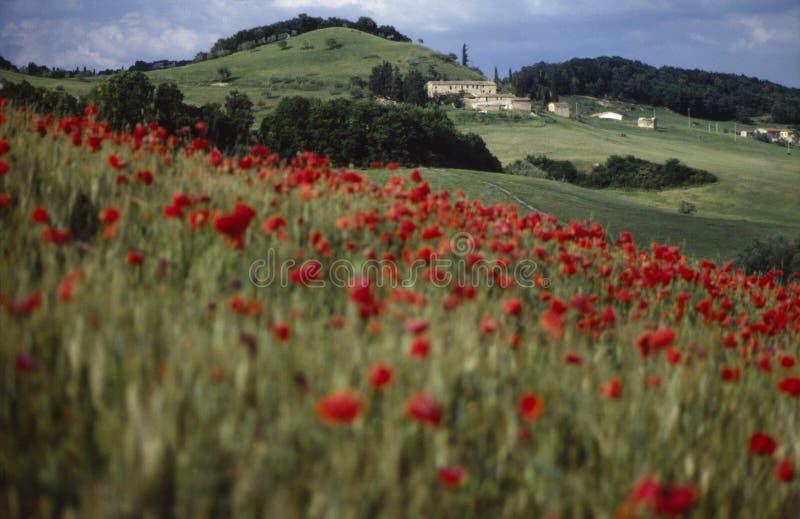 Landschap Umbrië 1 stock afbeelding