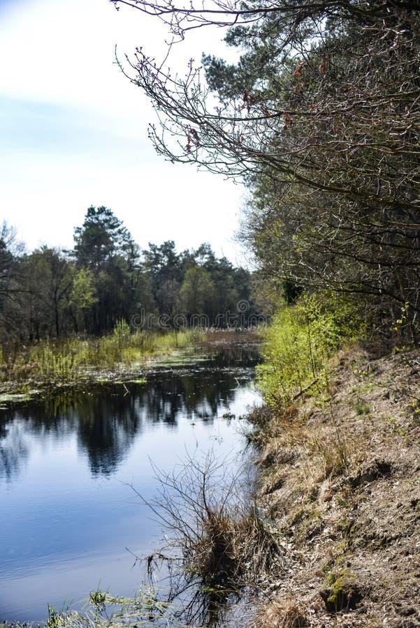 Landschap Utrechtse Heuvelrug foto de archivo