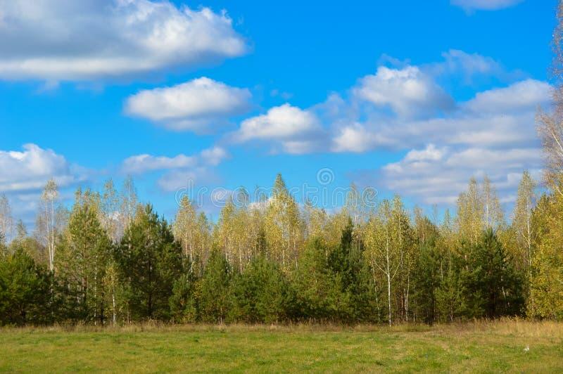 Landschap van aard, gebieden, weiden, gras, bomen, hemel royalty-vrije stock afbeelding