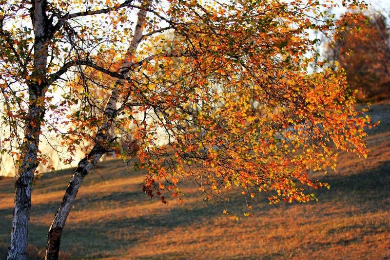 Landschap van Bashang-Weiden royalty-vrije stock foto