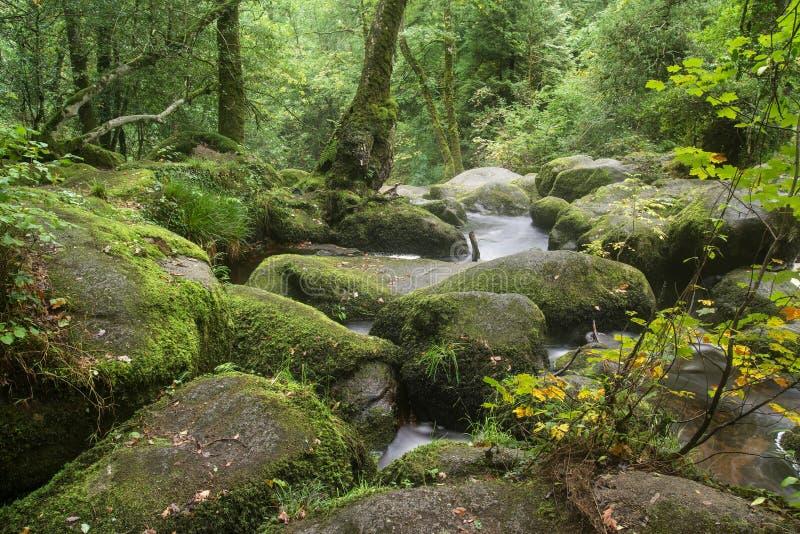 Landschap van Becky Falls-waterval in het Nationale Park Eng van Dartmoor stock foto