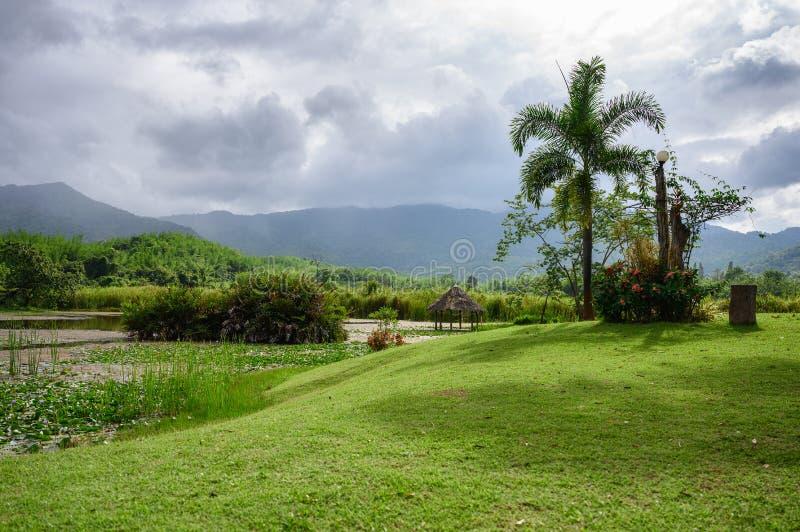 Landschap van boom met weide op moeras in regenwoud royalty-vrije stock afbeeldingen