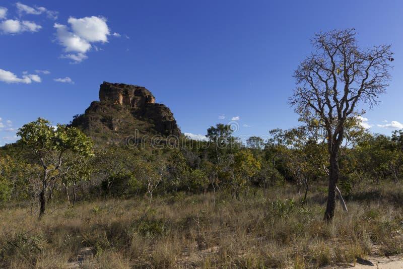 Landschap van Braziliaanse cerrado stock afbeelding