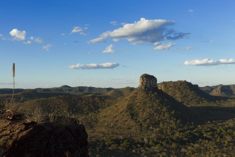 Landschap van Braziliaanse cerrado royalty-vrije stock foto's