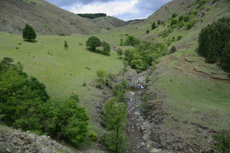 Landschap van de berg, Tometino polje stock foto's