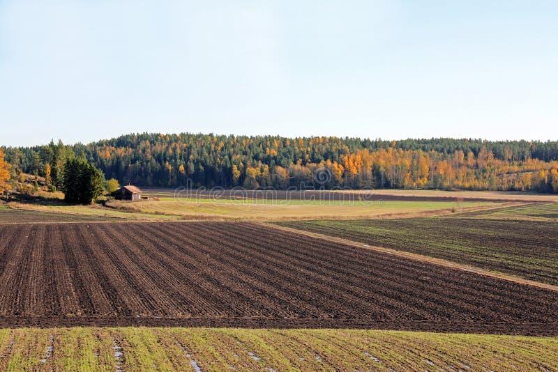Landschap van de Gecultiveerde Gebieden van de Herfst stock afbeelding