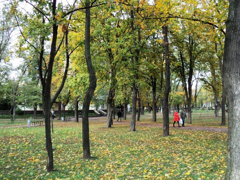 landschap van de gouden herfst in het stadspark stock foto's