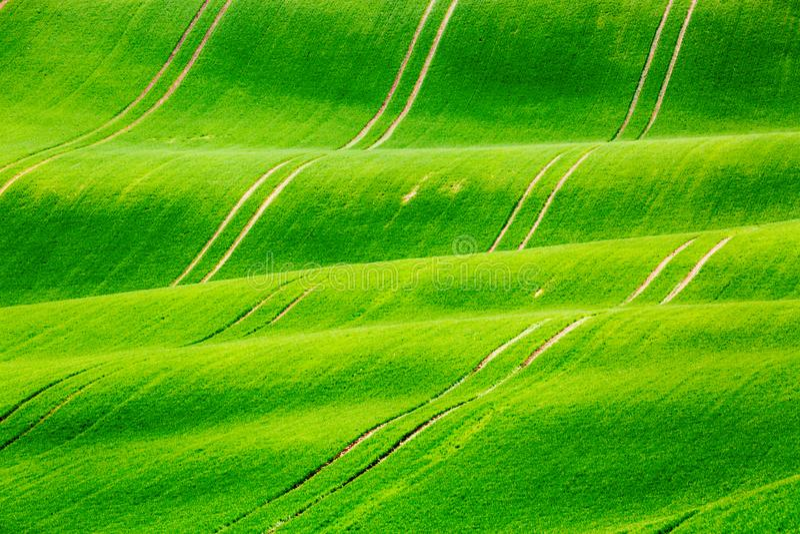 Landschap van de Minimalistic het natuurlijke groene lente met groene grasgebieden Rolling groene heuvels met gebied van tarwe De royalty-vrije stock afbeeldingen
