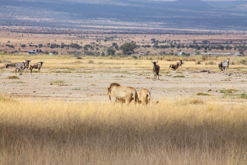 Landschap van de wildernis die het wild tonen royalty-vrije stock foto's