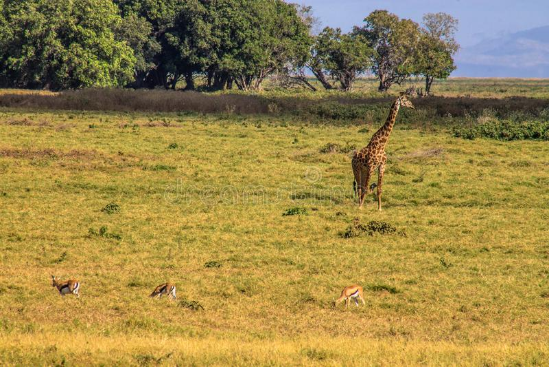 Landschap van de wildernis die het wild tonen royalty-vrije stock foto