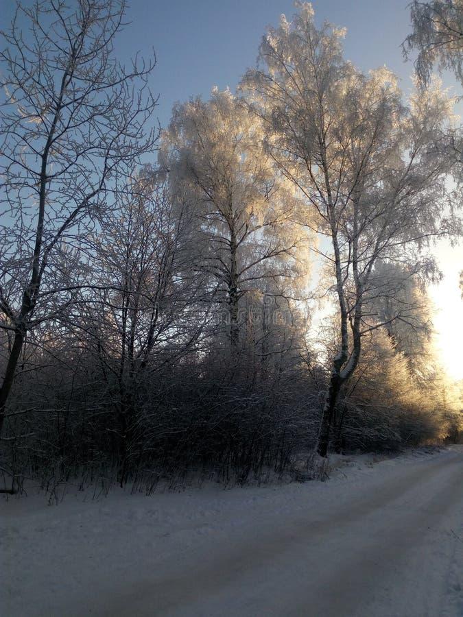 Landschap van de winterbomen die door de het toenemen zon worden verlicht royalty-vrije stock afbeelding